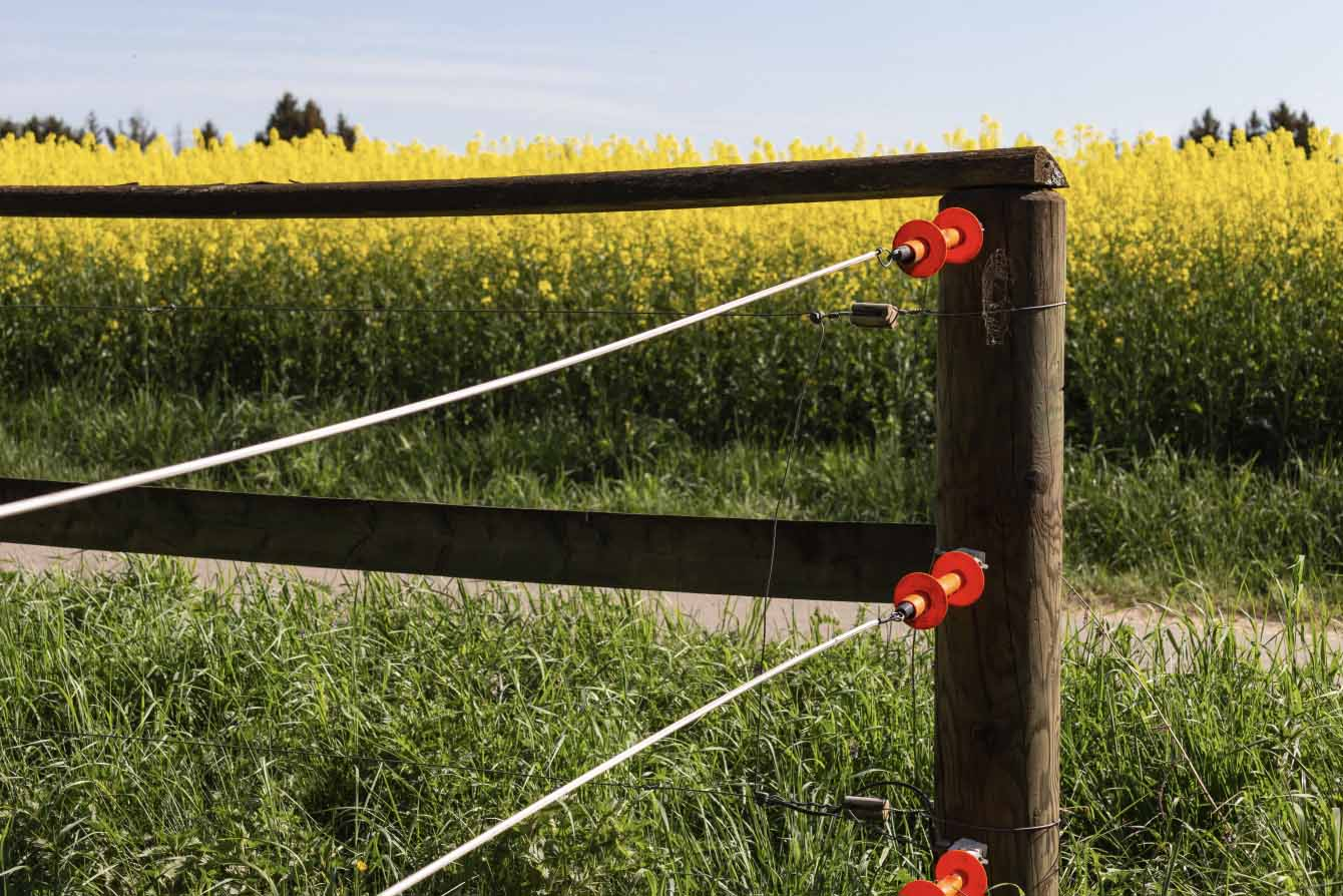 Electric fencing at turnout – The Fence & Best Set-up for You